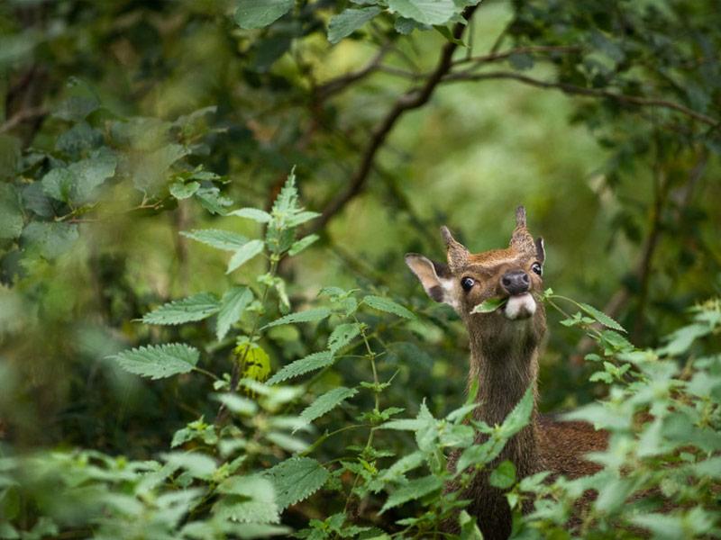 Deer in Killarney National Park